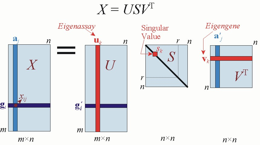 Singular Value Decomposition And Principal Component Analysis